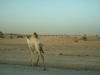 hotel_dubai_viaggio_low_cost__travel_foto_picture_photo_desert_safari-17