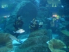 Dubai Aquarium: immersione tra gli squali