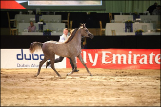 Dubai International Horse Fair & International Arabian Horse Championship 2013